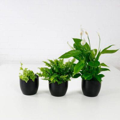 air purifying plant set