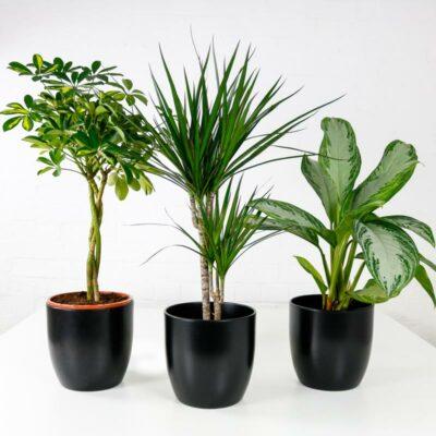 exotic plant bundle