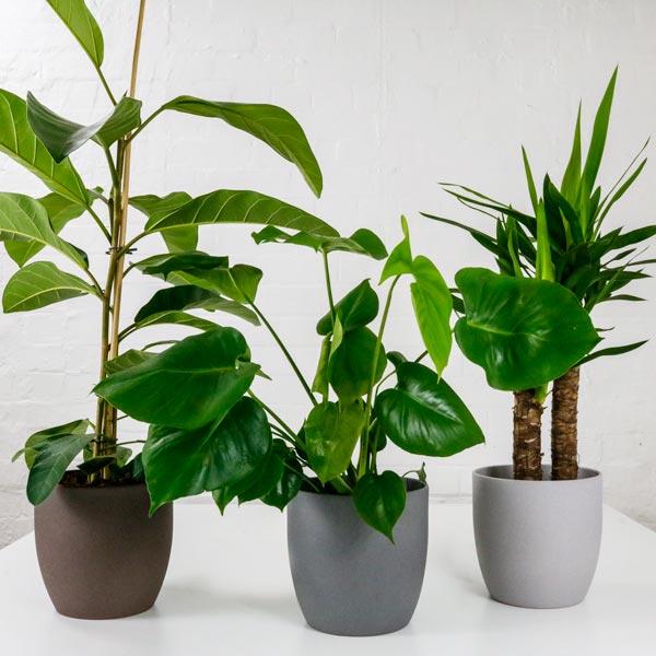 showstopper plant bundle pots