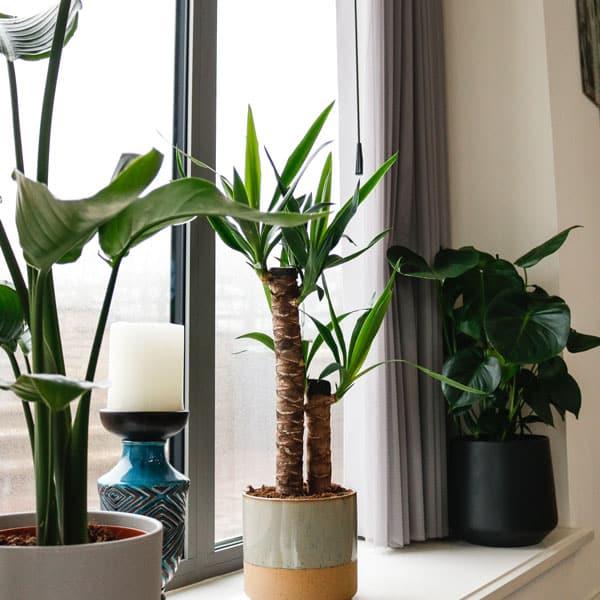 large plant bundle