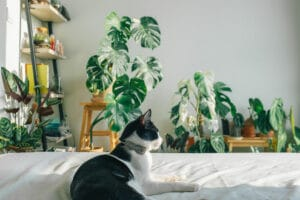 pet safe houseplants